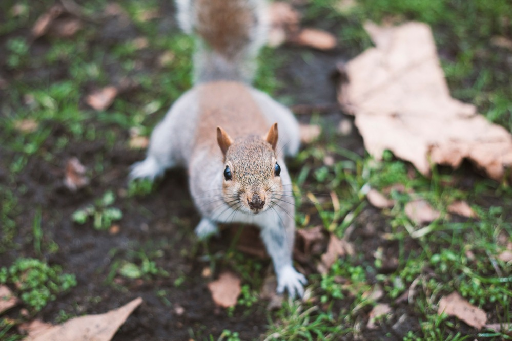 focus-aventure-londres-hyde-park-animal