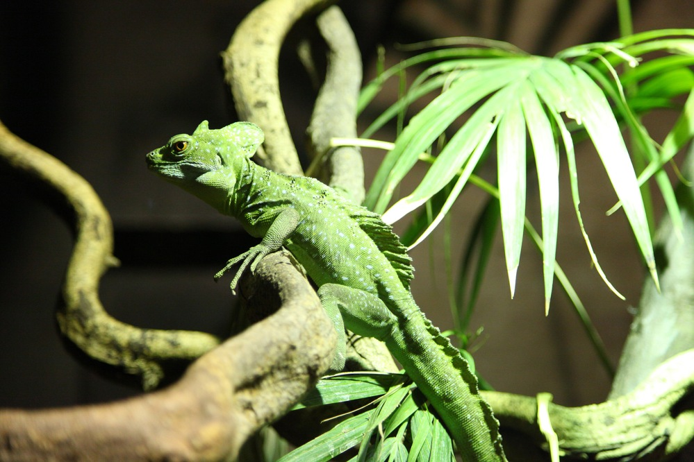 focus-aventure-londres-zoo-lezard