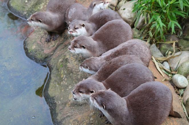 focus-aventure-londres-zoo-loutre