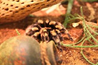 focus-aventure-londres-zoo-spider
