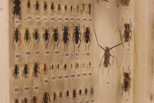 La partie Insectes du Musée