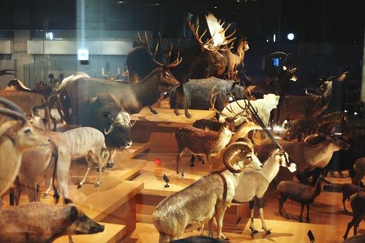 Nombreuses espèces animales empaillées au Musée de la Science et de la Nature