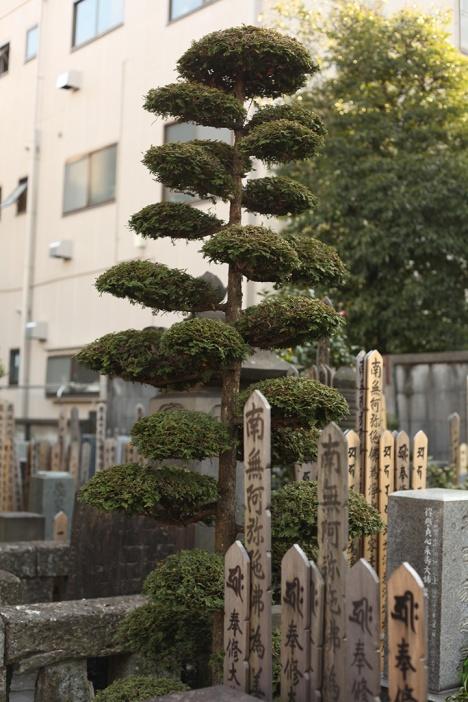 julia-laffaille-focus-aventure-tokyo-japon-cimetiere