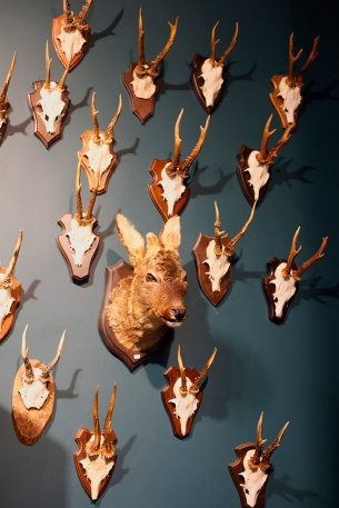 focus-aventure-amsterdam-magasin-taxidermyamsterdam