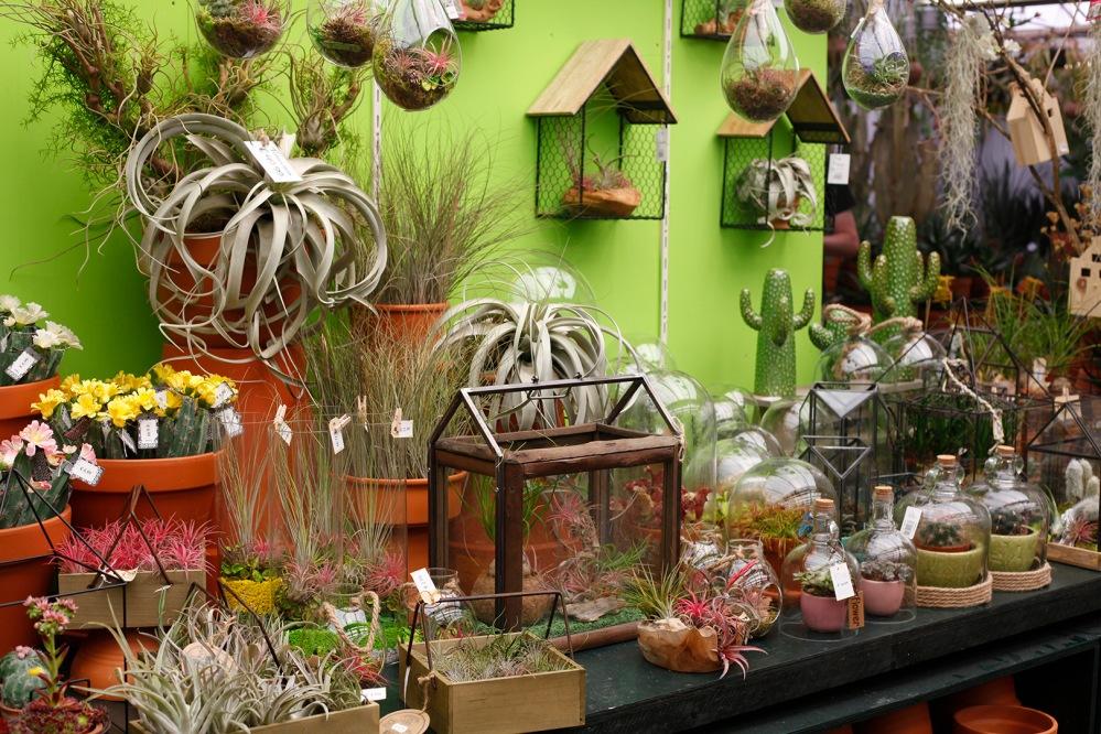 focus-aventure-amsterdam-marché-aux-fleurs