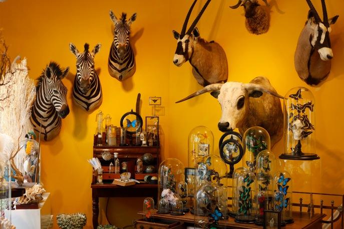 focus-aventure-amsterdam-taxidermyamsterdam-magasin