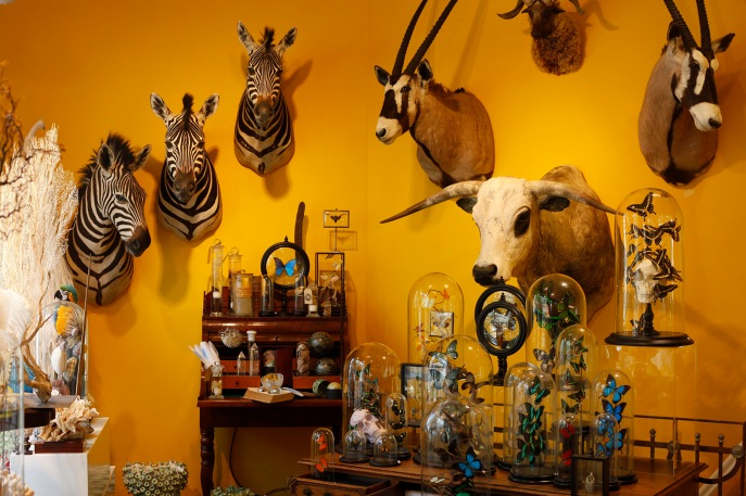 focus-aventure-amsterdam-taxidermyamsterdam-magasin