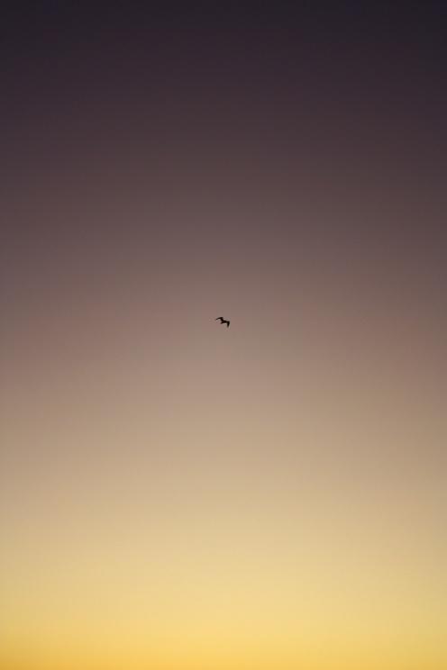 focus-aventure-landes-capbreton-paysage