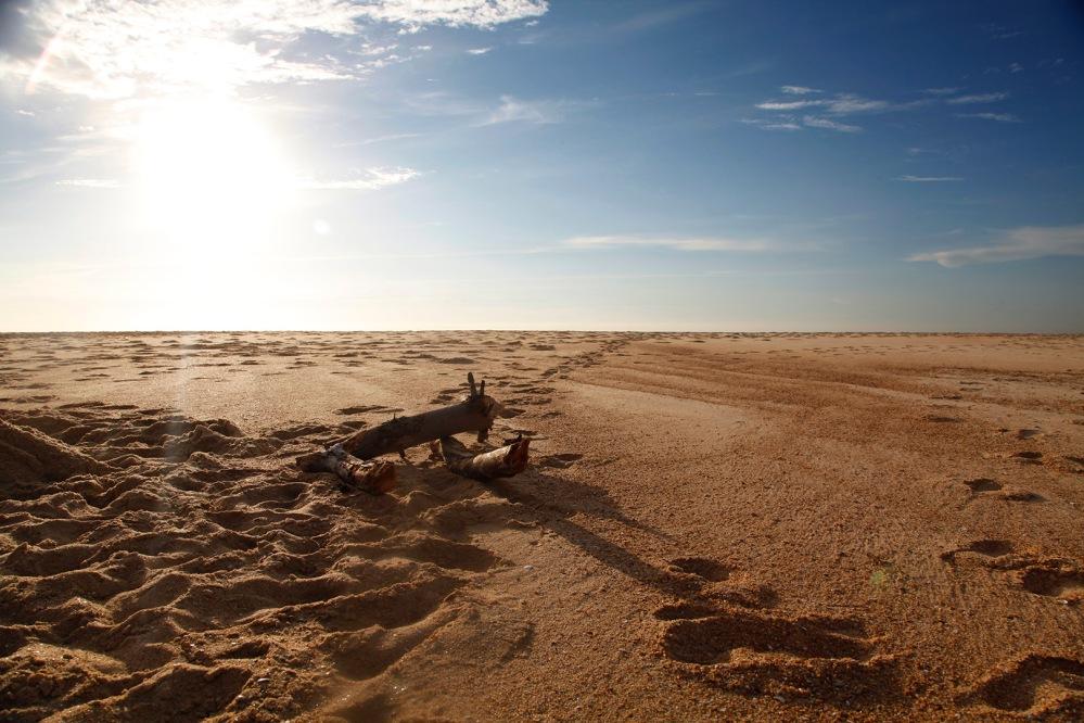 focus-aventure-landes-paysage-plage-sauvahe