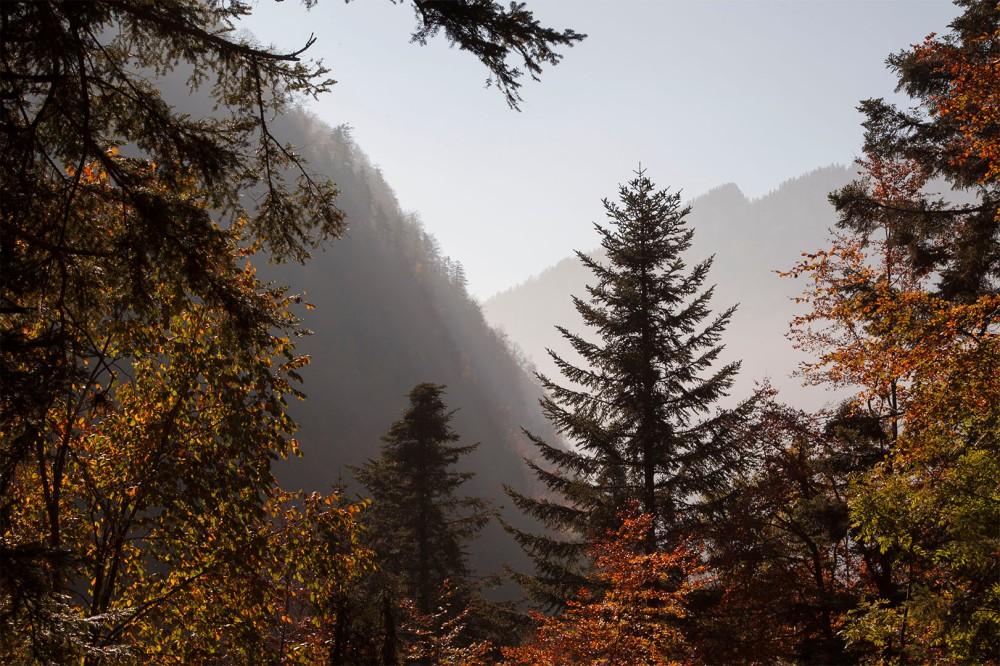 focus-aventure-chartreuse-montagne-foret-randonnee-fetrus