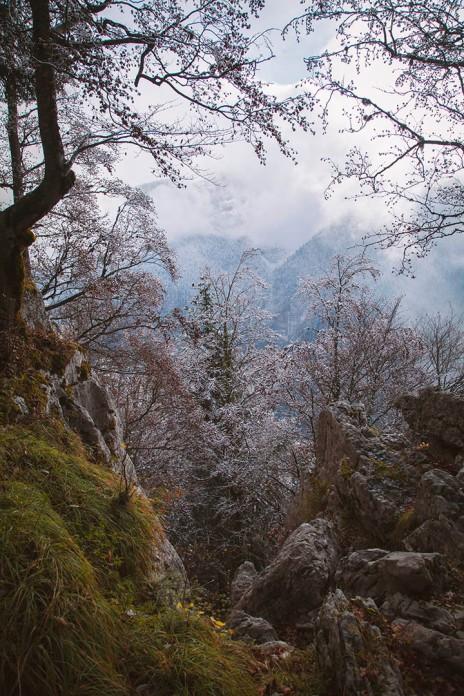 focus-aventure-chartreuse-montagne-saint-pierre-de-chartreuse-paysage-foret