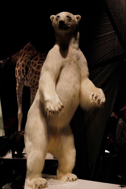 focus-aventure-julia-laffaille-lyon-musee-confluence-faune-2