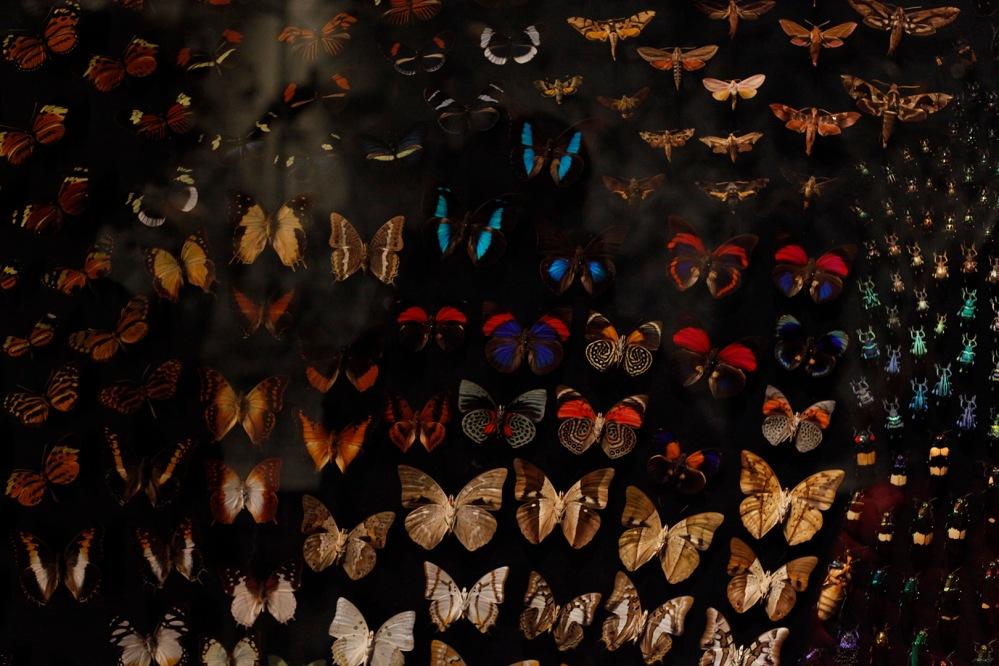 focus-aventure-julia-laffaille-lyon-musee-confluence-papillon