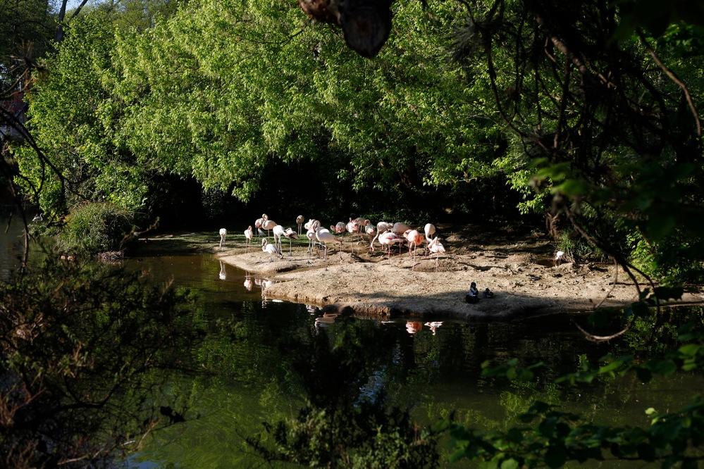 focus-aventure-julia-laffaille-lyon-zoo-parc-tete-dor