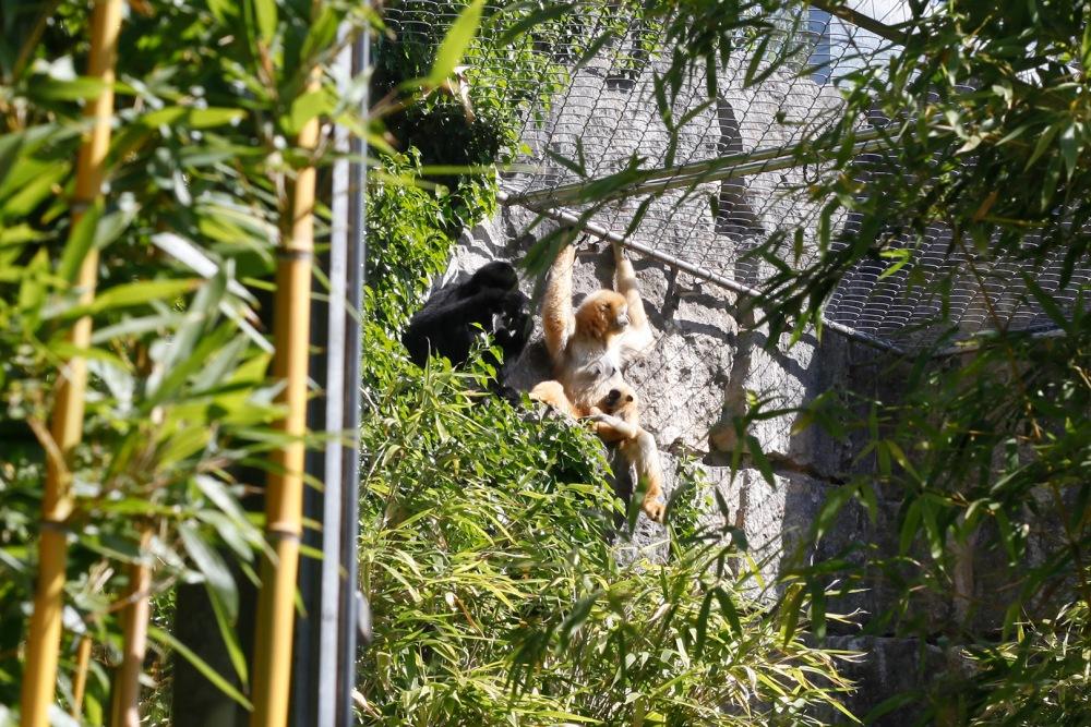 focus-aventure-julia-laffaille-lyon-zoo