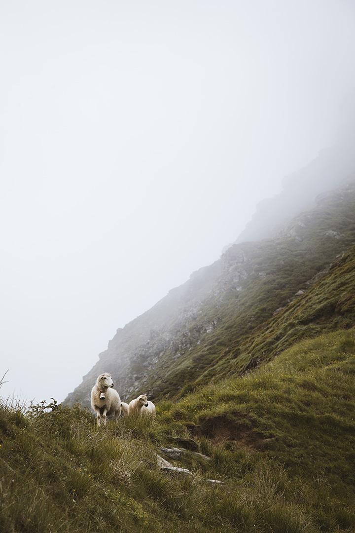 julia-laffaille-focus-aventure-savoie-mont-blanc-mouton