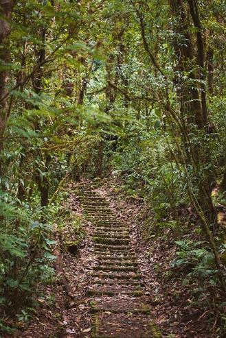costa-rica-focus-aventure-julia-lt-monteverde-paysage-3