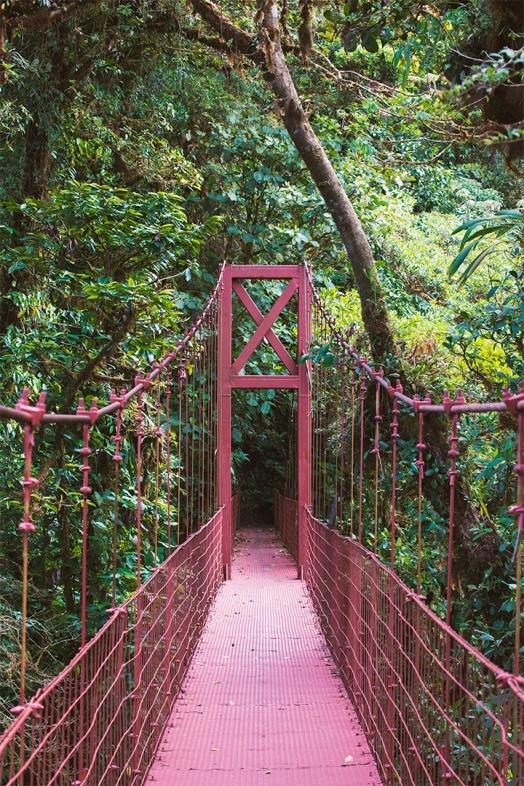 costa-rica-focus-aventure-julia-lt-monteverde-paysage-pont