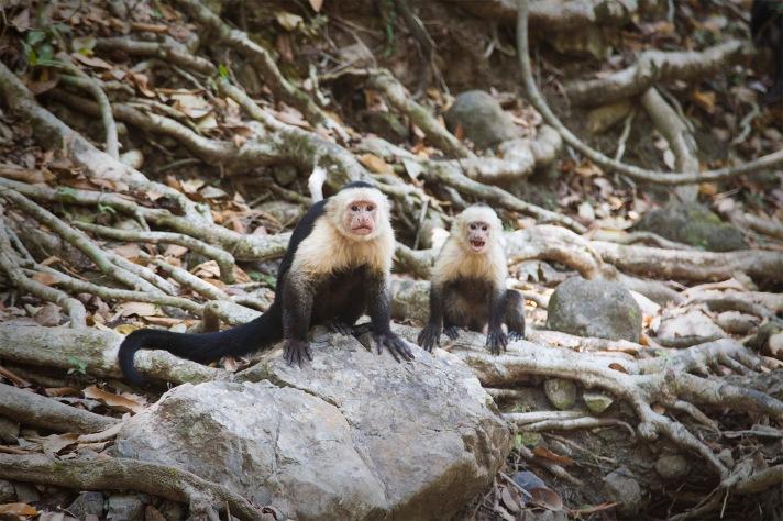 costa-rica-focus-aventure-julia-lt-paysage-montezuma-animaux