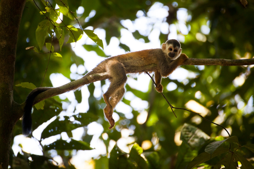 costa-rica-focus-aventure-JuliaLT-manuelantonio-singe-paysage