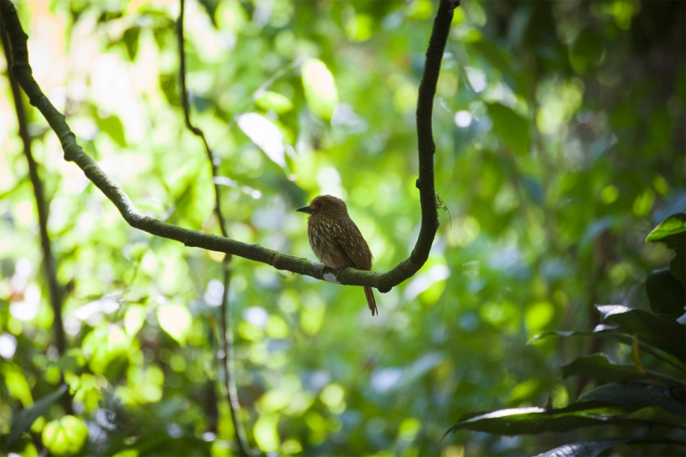 costa-rica-focus-aventure-JuliaLT-parc-national-carara-bird