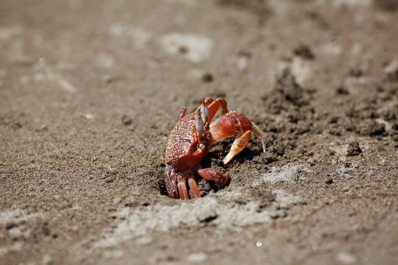 costa-rica-focus-aventure-JuliaLT-uvita-paysage-plage-crabe