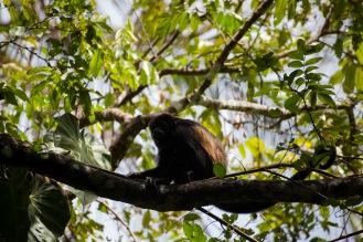 julia-laffaille-focus-aventure-cahuita-singe