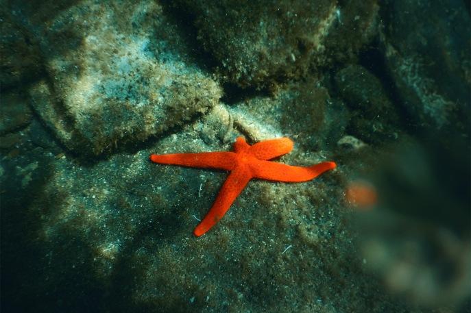 julia-laffaille-focus-aventure-cinque-terre-italie-vernazza-mer