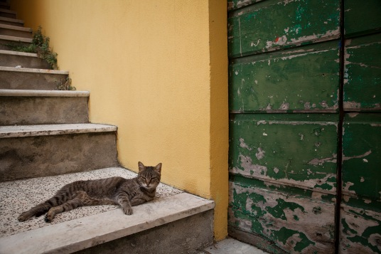 julia-laffaille-focus-aventure-italie-tellaro-rue