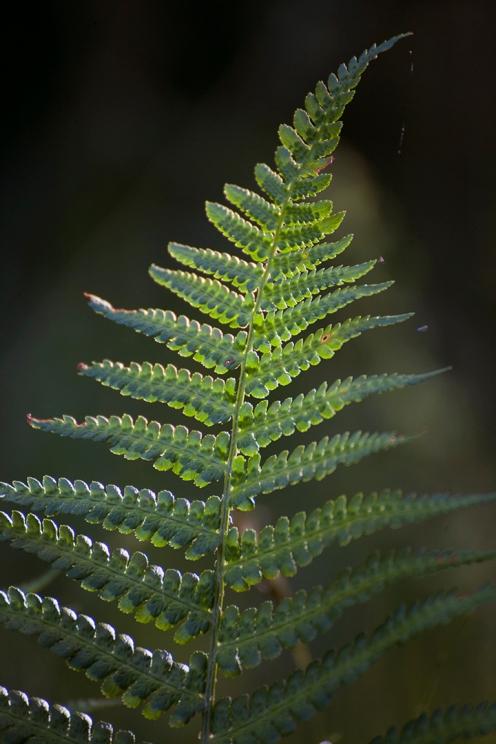 julia-laffaille-focus-aventure-savoie-herbier