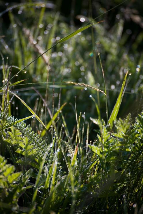 julia-laffaille-focus-aventure-savoie-herbier2