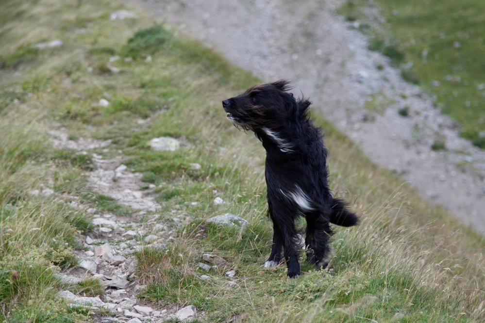 julia-laffaille-focus-aventure-parc-des-ecrins-reportage