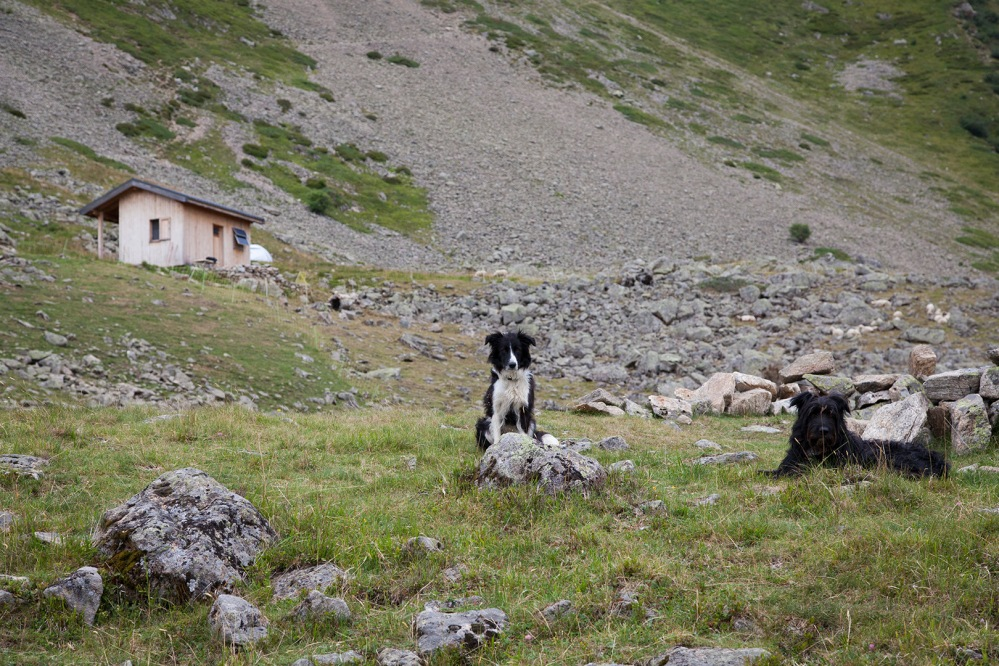 julia-laffaille-focus-aventure-reportage-berger