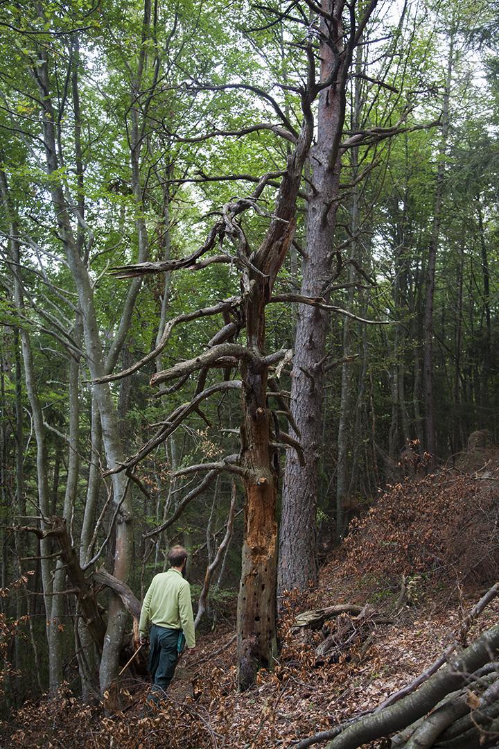 julia-laffaille-reportage-garde-forestier-17