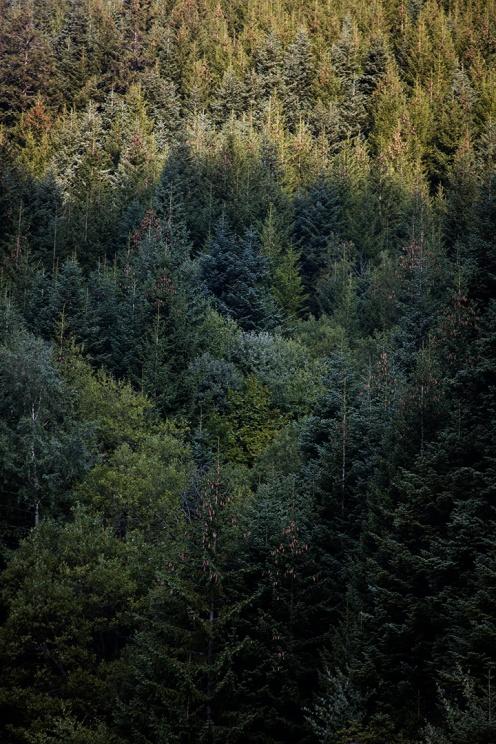 julia-laffaille-reportage-garde-forestier-2